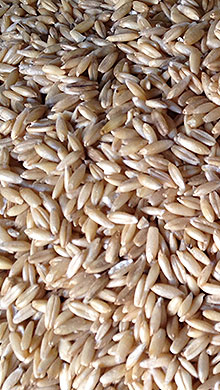 Oat cereal cultivation spelled legumes